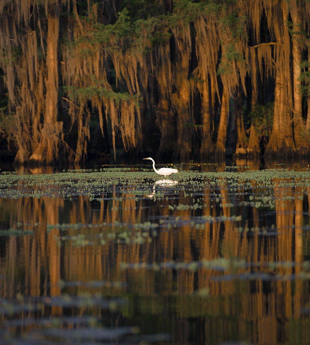 Swamp, Dmitry Samoylin