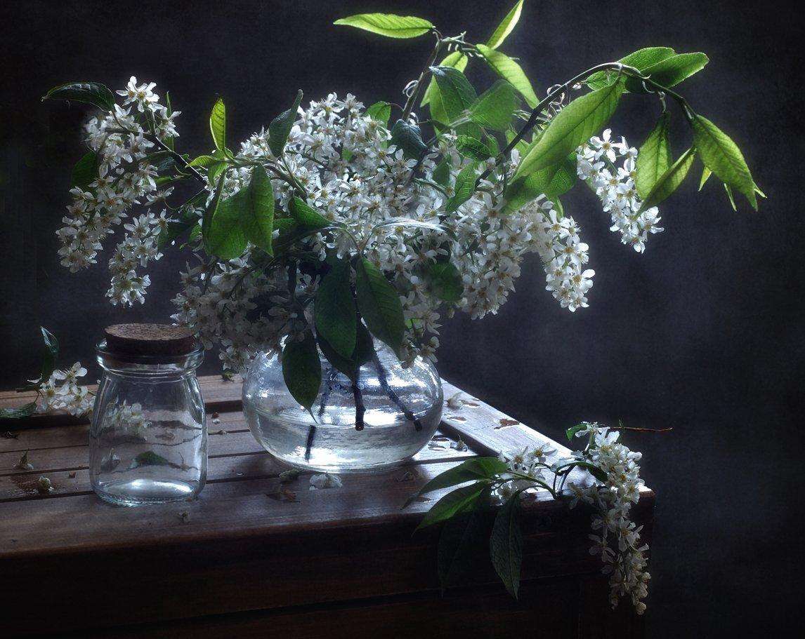 натюрморт,черемуха,весна, Наталия К