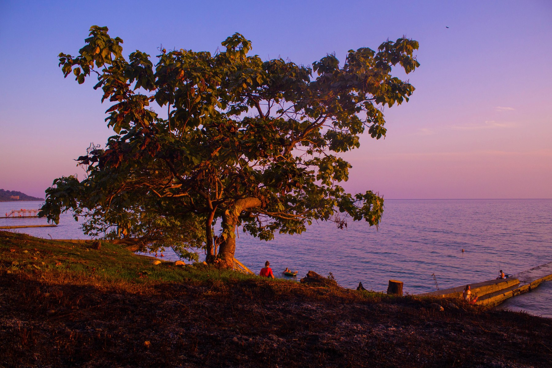 закат, море, эвкалипт, деревья, тепло, солнце, небо, Салтыкова Алёна
