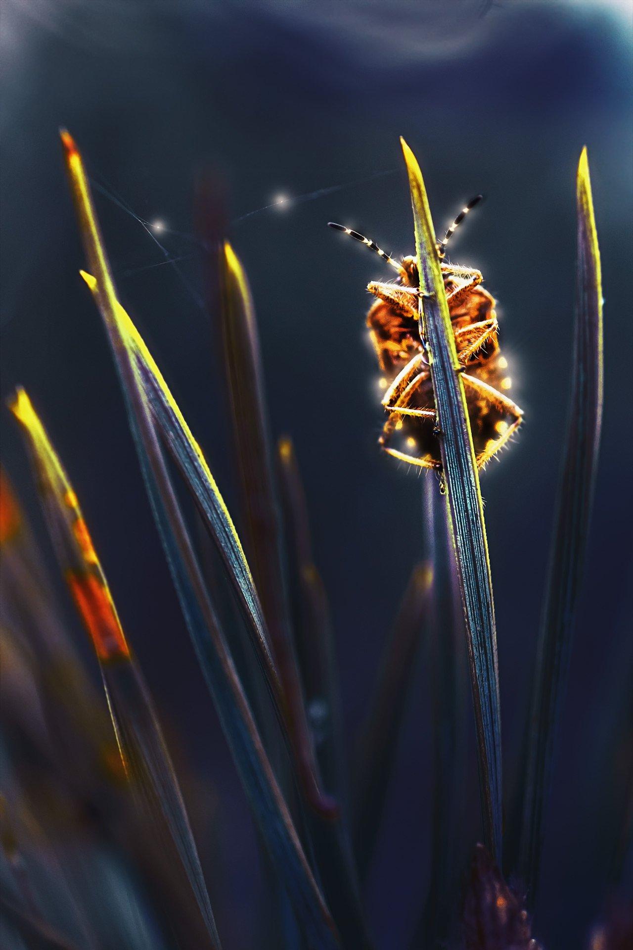 жук,желтый,лист,зелень,свет,насекомое,красный,шмель, Котов Юрий