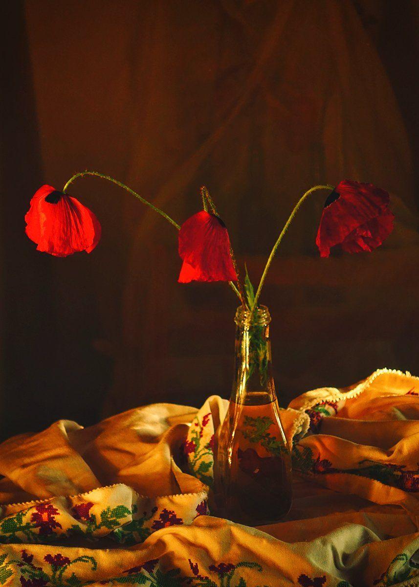 flowers,still llife,poppies, mustafa yagci
