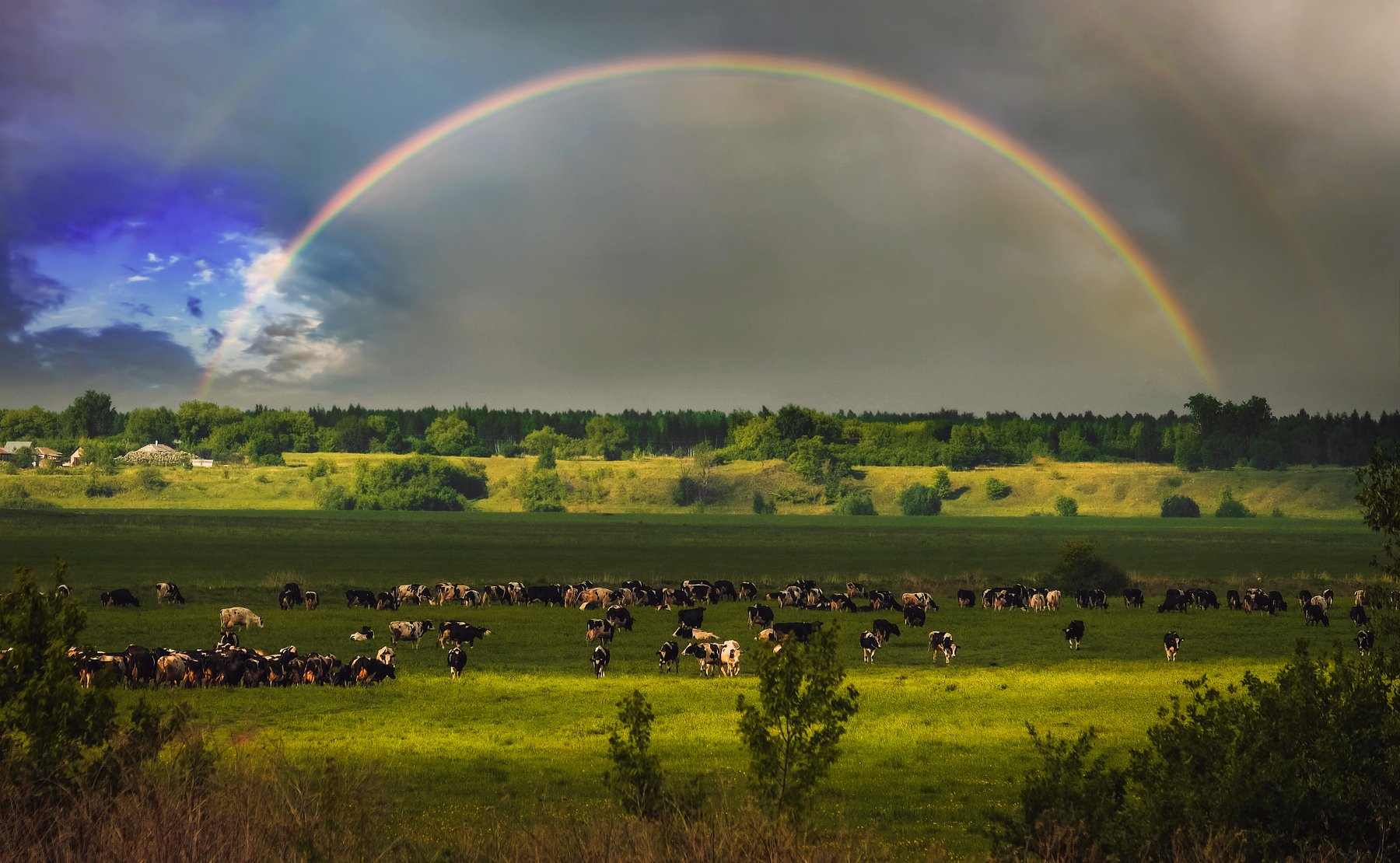 фото, природа, деревня, лес, весна, гроза, радуга, коровы, Екатерина
