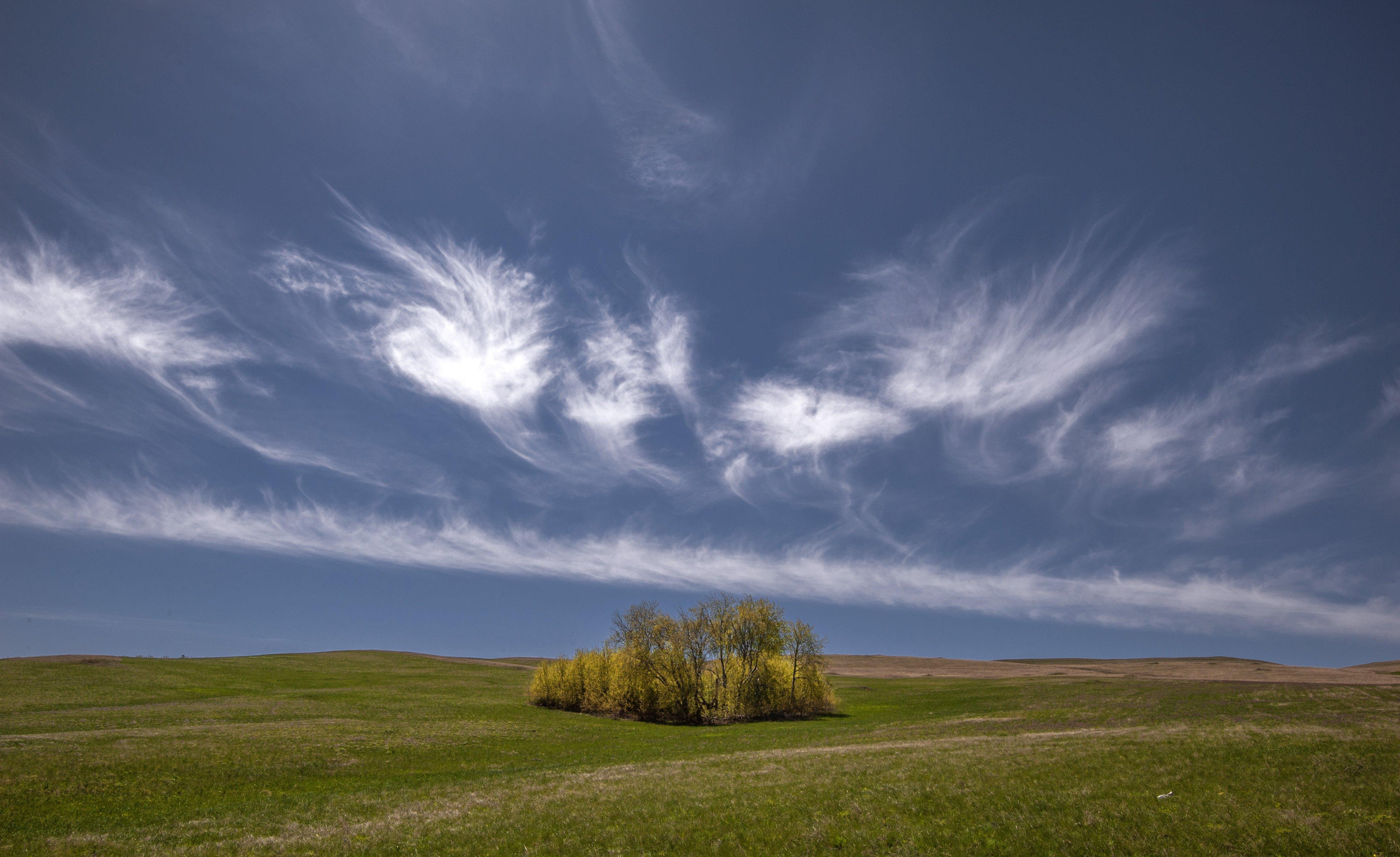 ветер, май, облака, небо, поле, трава, оренбуржье, Логачёв Илья