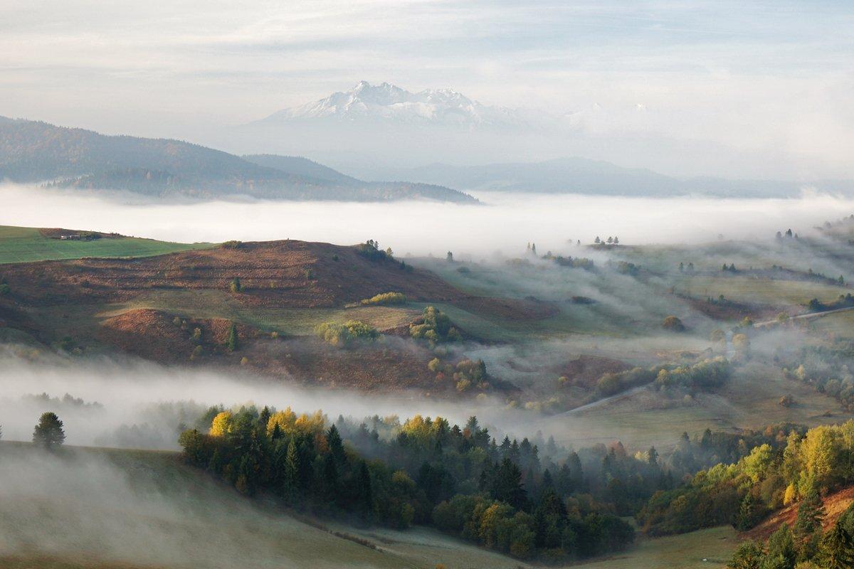 morning,sunrise,sunset,fog,haze,tatras,trees, Kobran
