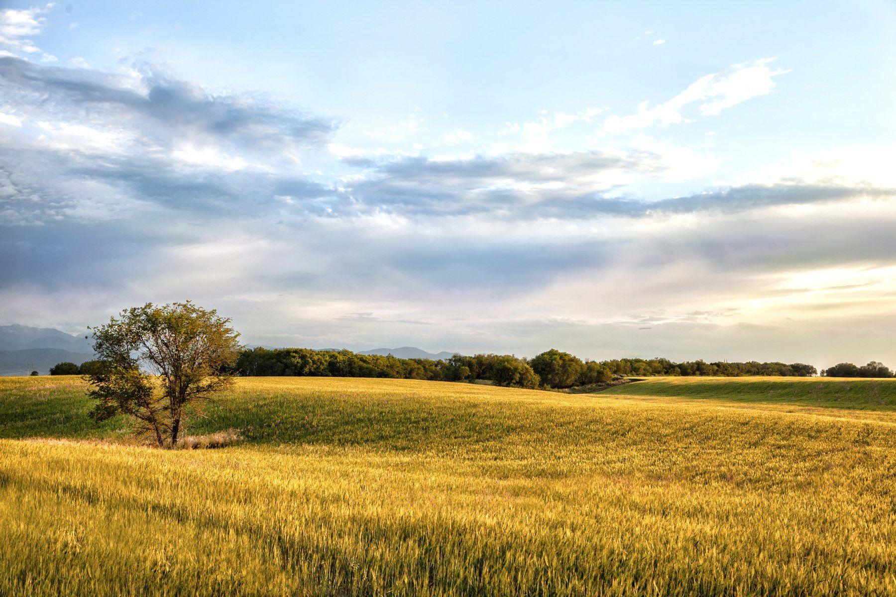 пейзаж, поле, пшеница, закат, облака, дерево, фотограф, алматы, фотограф алматы, landscape, sunset, the sun, wheat, tree, photographer, аlmaty, amazing, awesome, Вера Иванова