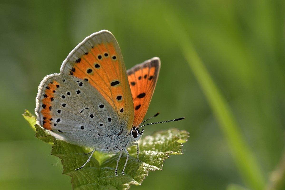 бабочка butterfly, Jaroslav Mego