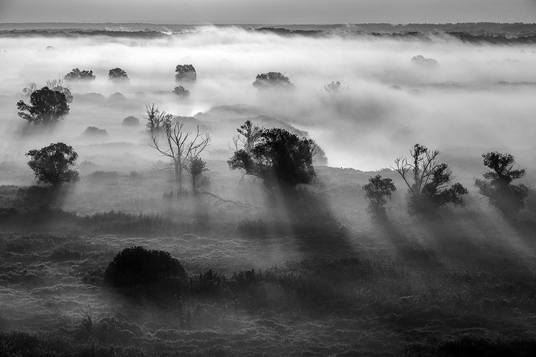 тени,свет,деревья,туман, Соколов Андрей
