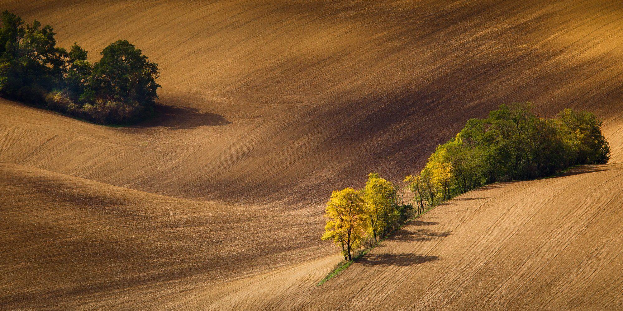 trees,landscape,hills,autumn, Marek Biegalski