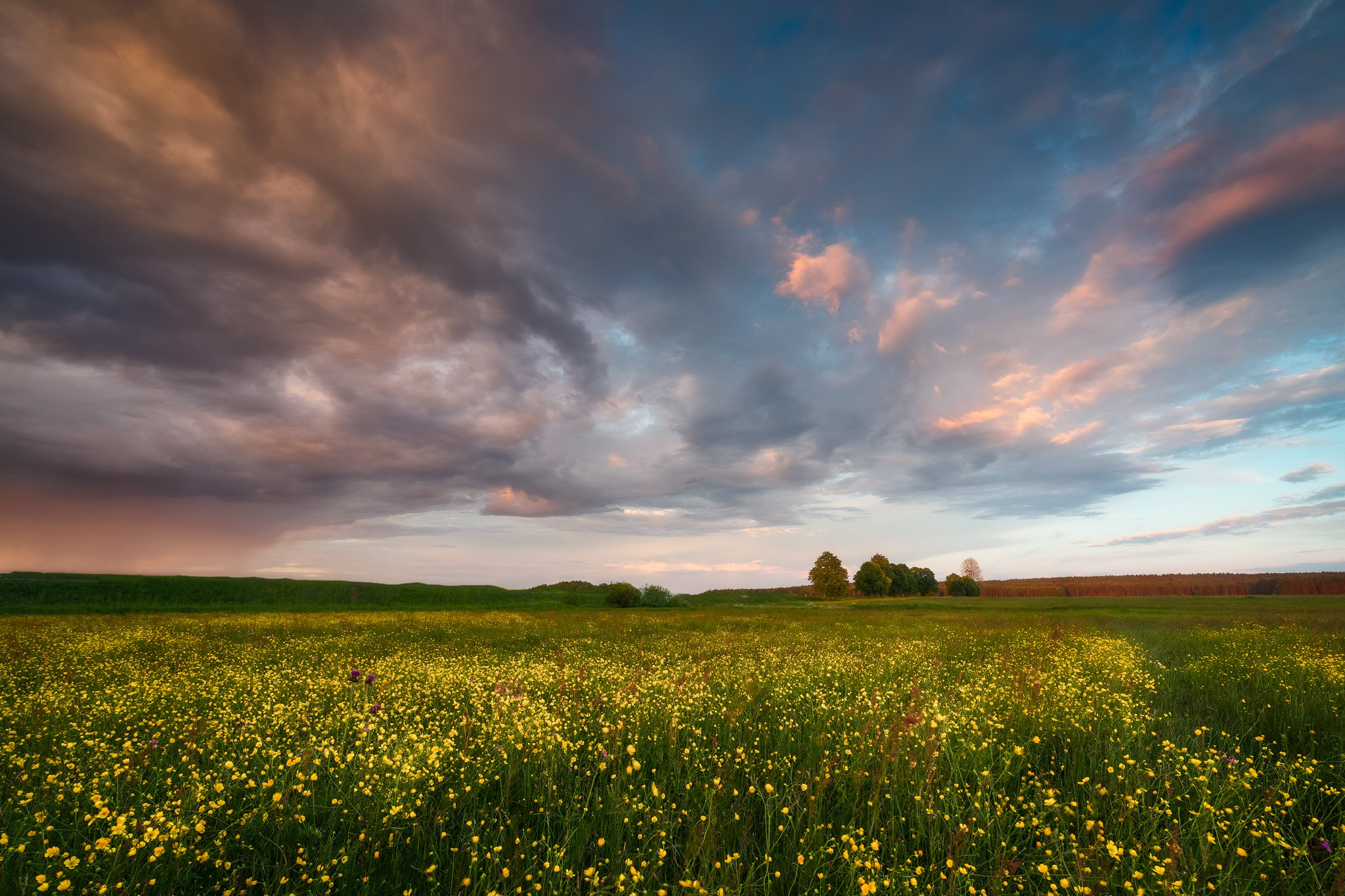 buttercups wildflowers flowers sunset sky clouds colors mood poland podlasie, Maciej Warchoł