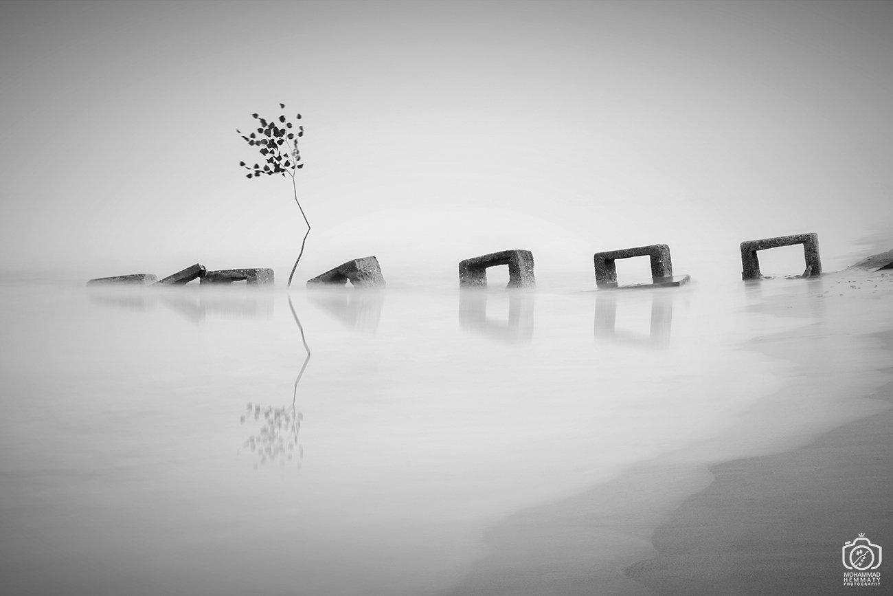 longexposure,canon80d,tree,sea,nature,fog,black&white,canon,photo,photographer, Mohammad Hemmaty