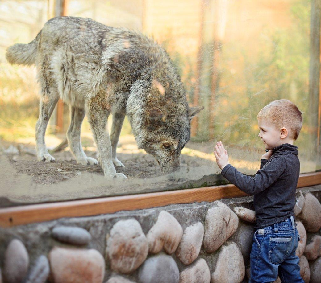 дети, ребенок, волк, зоопарк, животные, дети и животные, Юлия Полуэктова