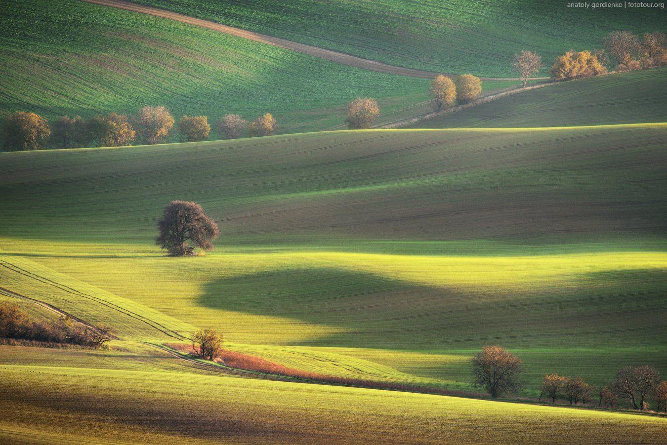 пейзаж, природа, дерево, моравия, чехия, осень, Анатолий Гордиенко www.fototour.org