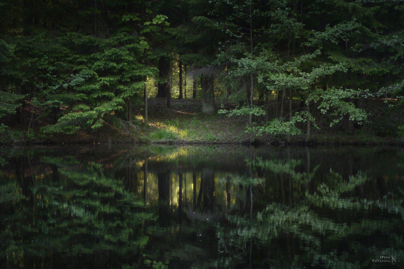 лес, отражение, река, сергиевка, парк, ленинградская область, кристателька, Ольга Потапова
