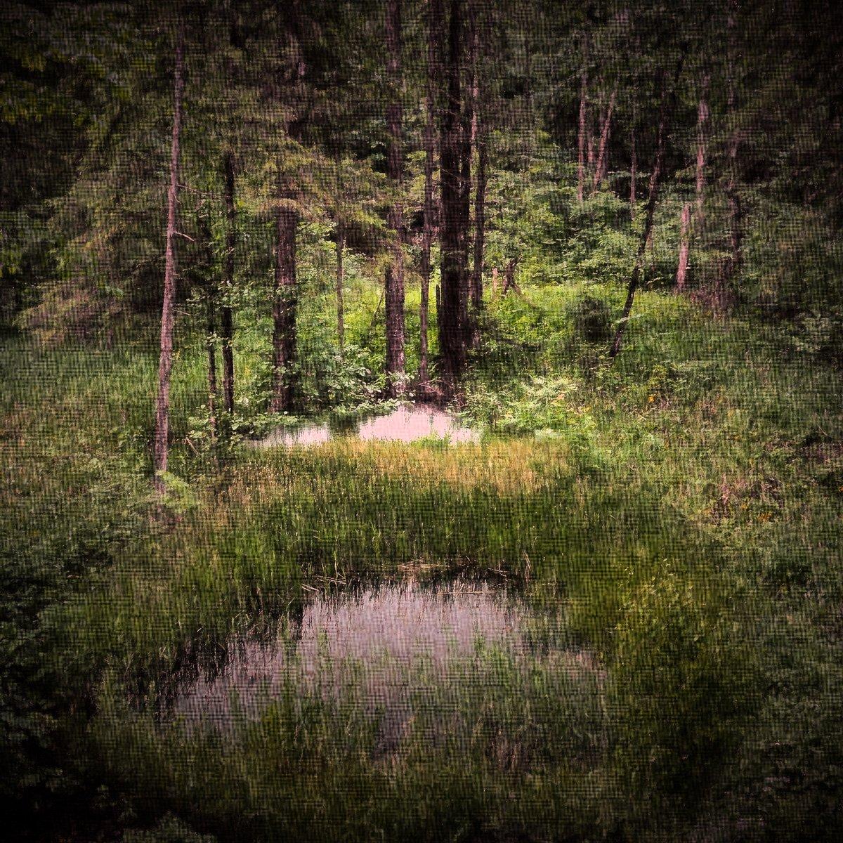 лес, Rimantas Petrikas