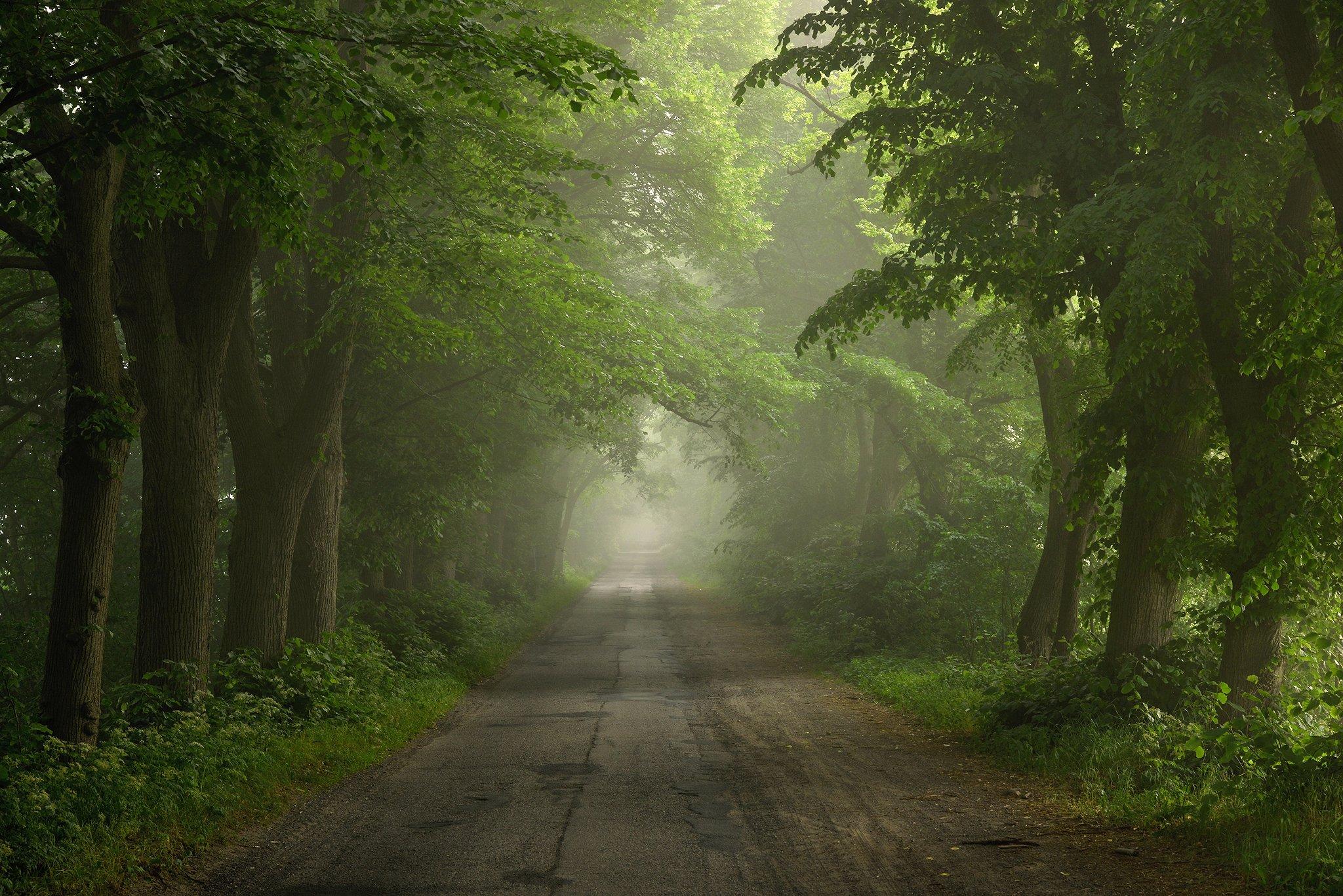 road path misty foggy trees green spring poland magic, Radoslaw Dranikowski