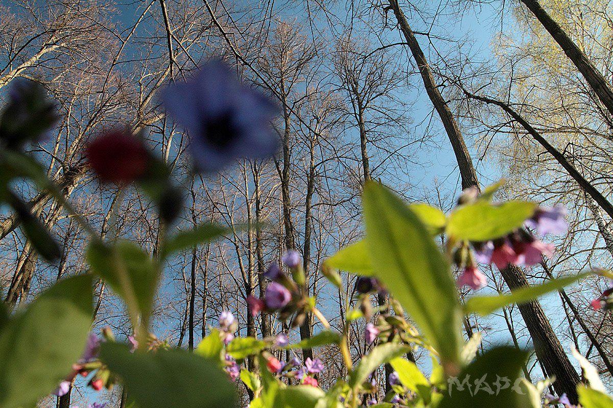 пейзаж весна лес цветы деревья, Шангареев Марс