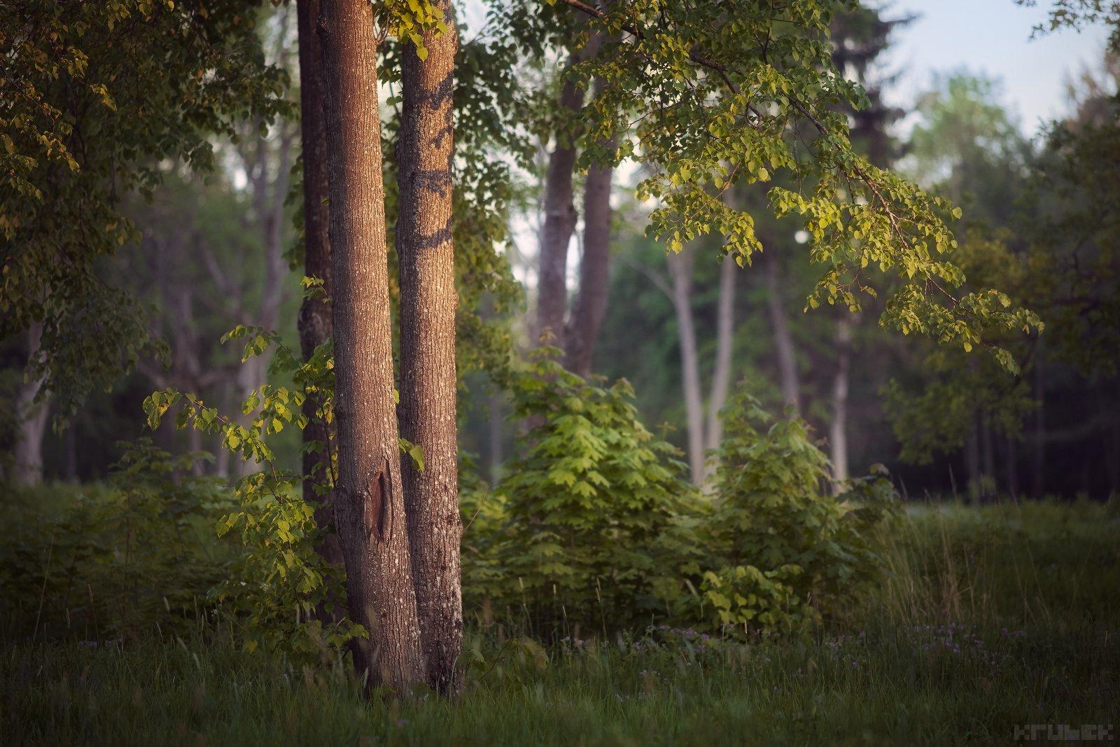 баболовский парк, закат, лес, природа, KrubeK