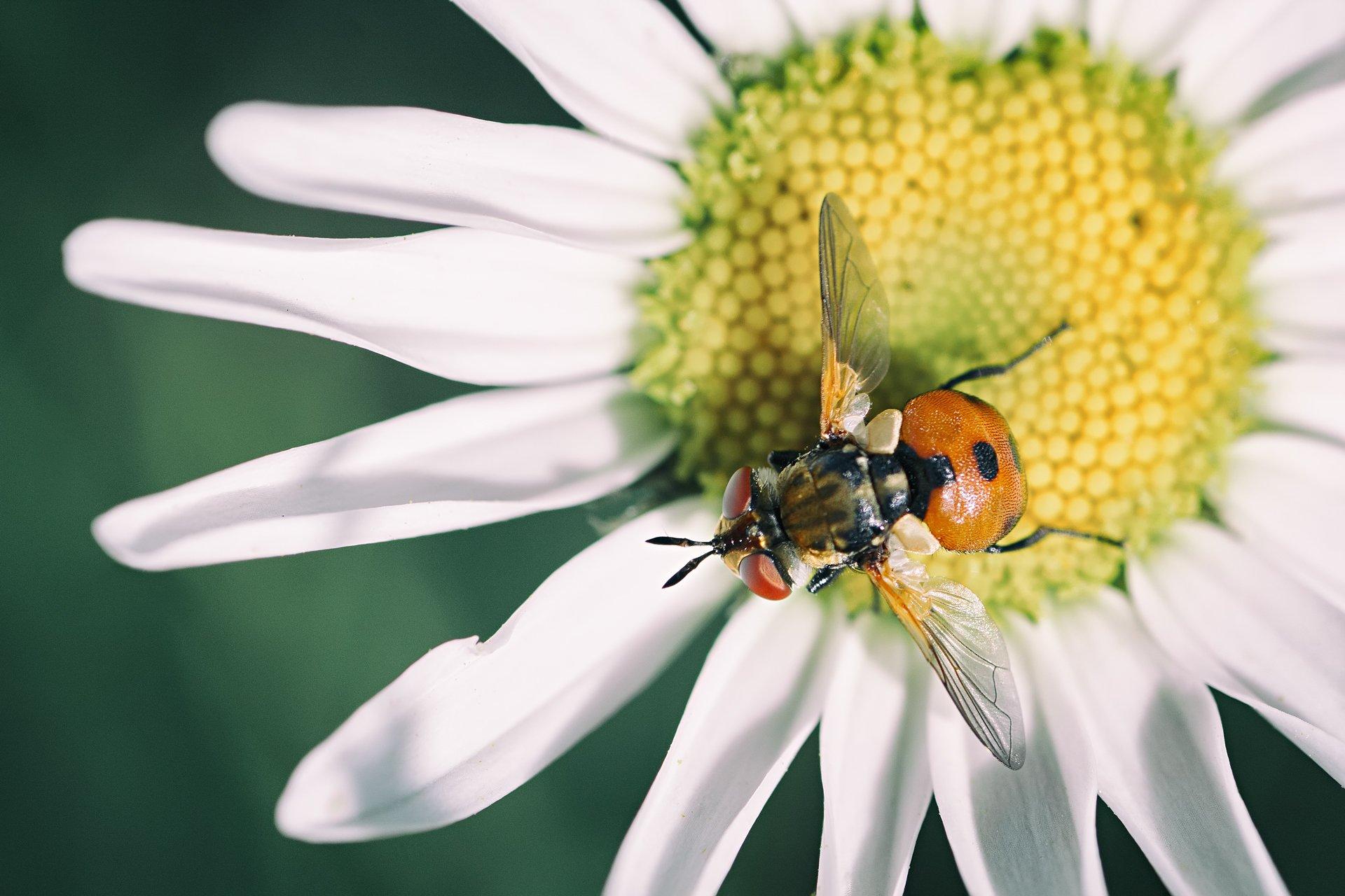 мох,цвет,фон,желтый,семя,цветок,муха, Котов Юрий
