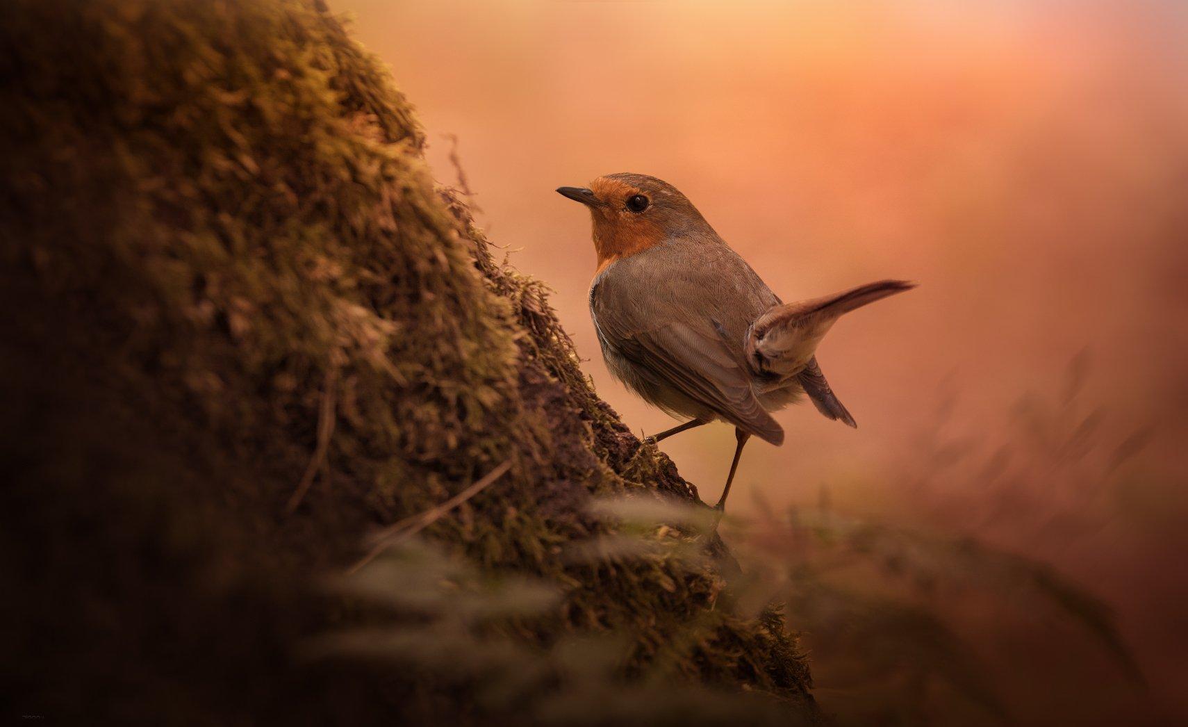 природа, лес, животные, птицы, Дмитрий Посевич