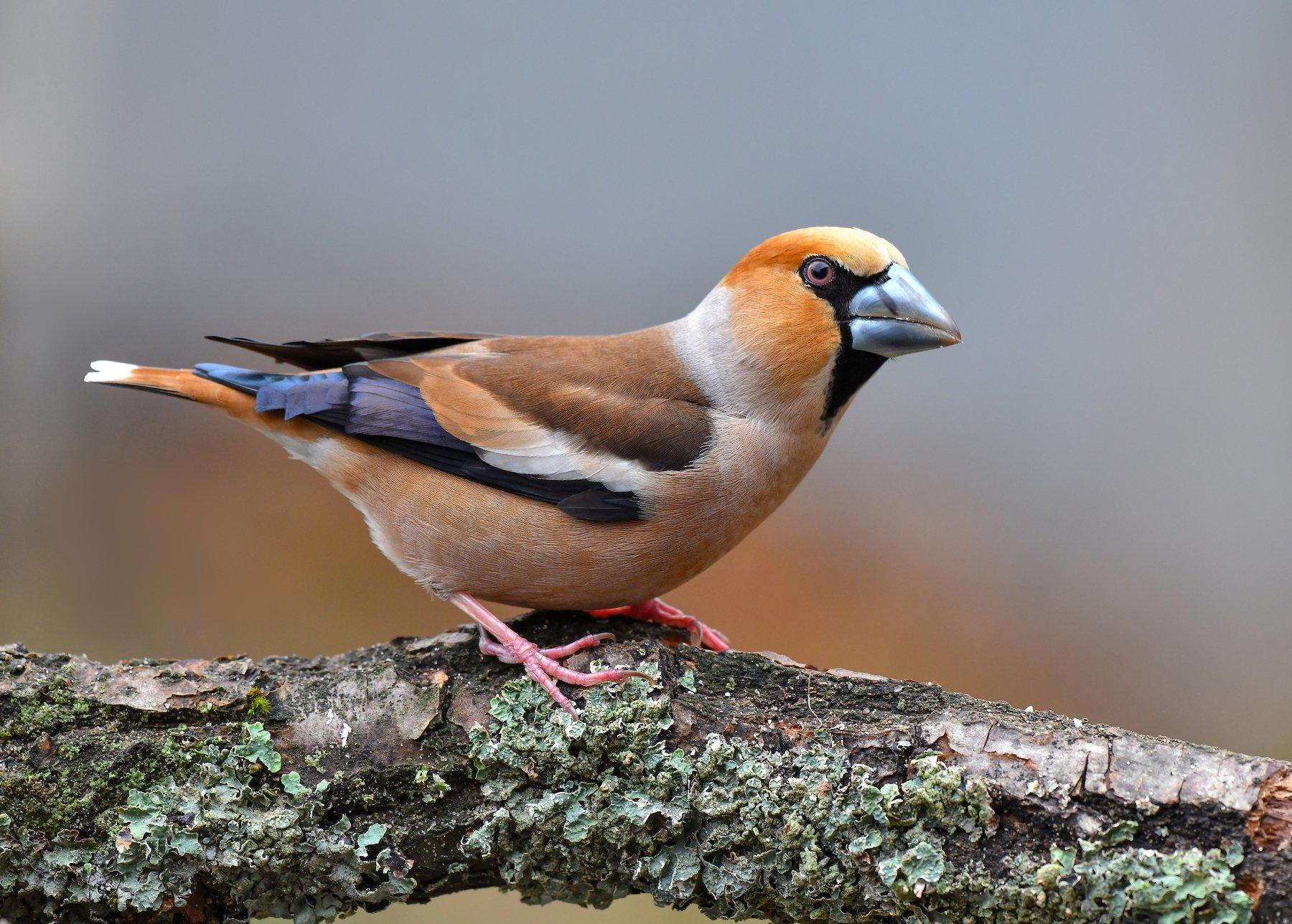 птицы,природа,весна, Киселёв Андрей