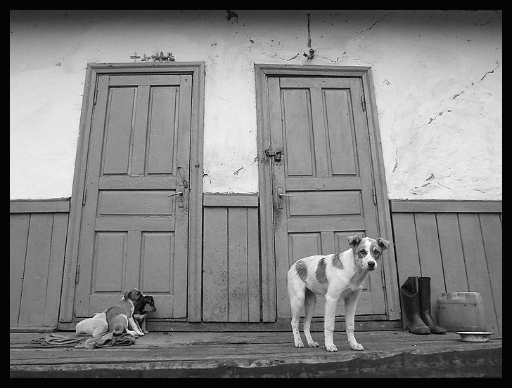 собака, щенки, Roman Pechizhak