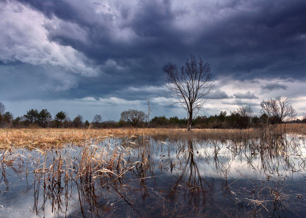 полдень, тучи, облака, дерево, камыш, озеро, вода, Алексей Черепанов