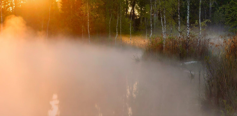 питет, рассвет, пейзаж, утро, туман, болото, озеро, Таня She (Aiya)
