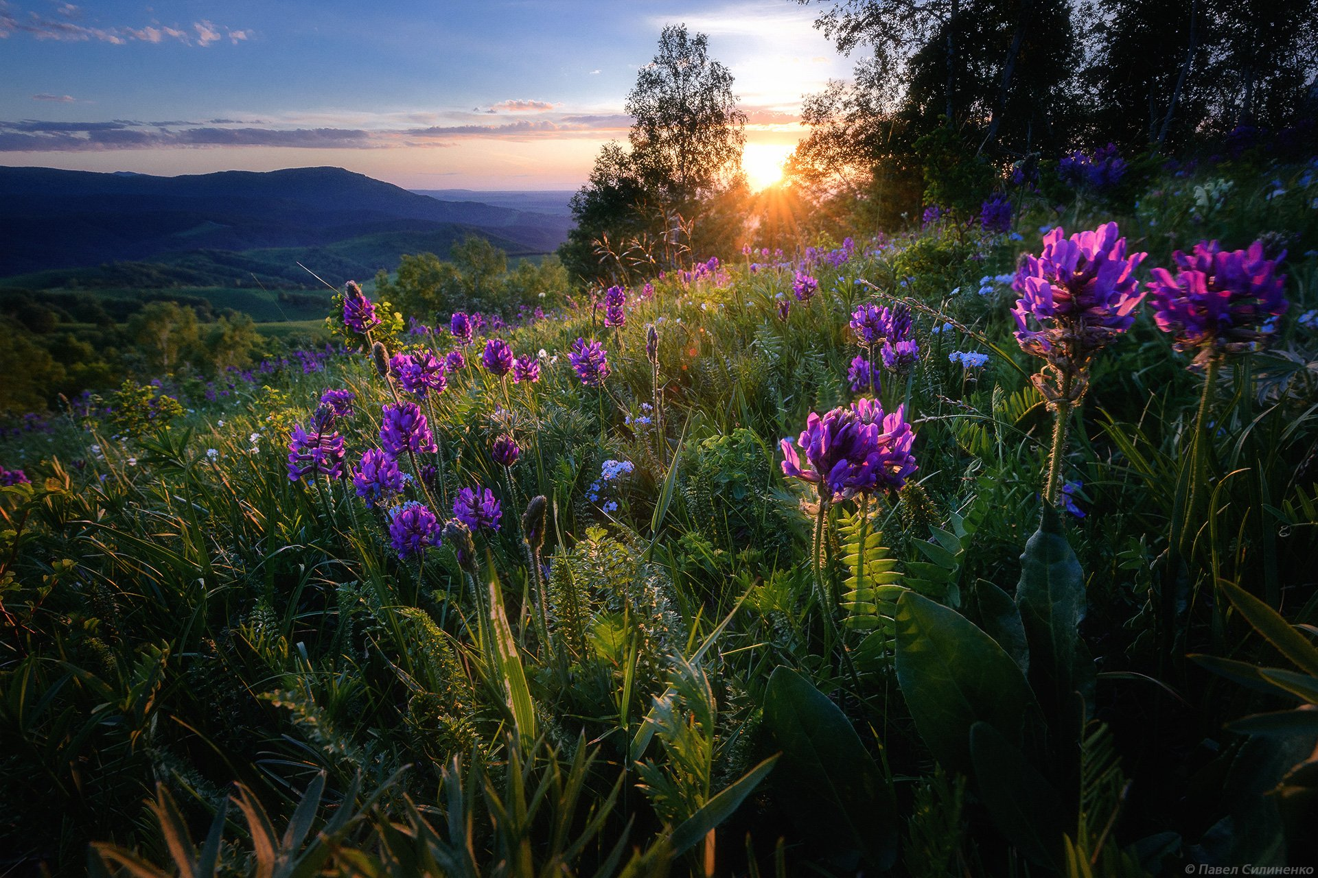 алтай, белокуриха, пейзаж, закат, вечер, лето, свет, цветы, Павел Силиненко