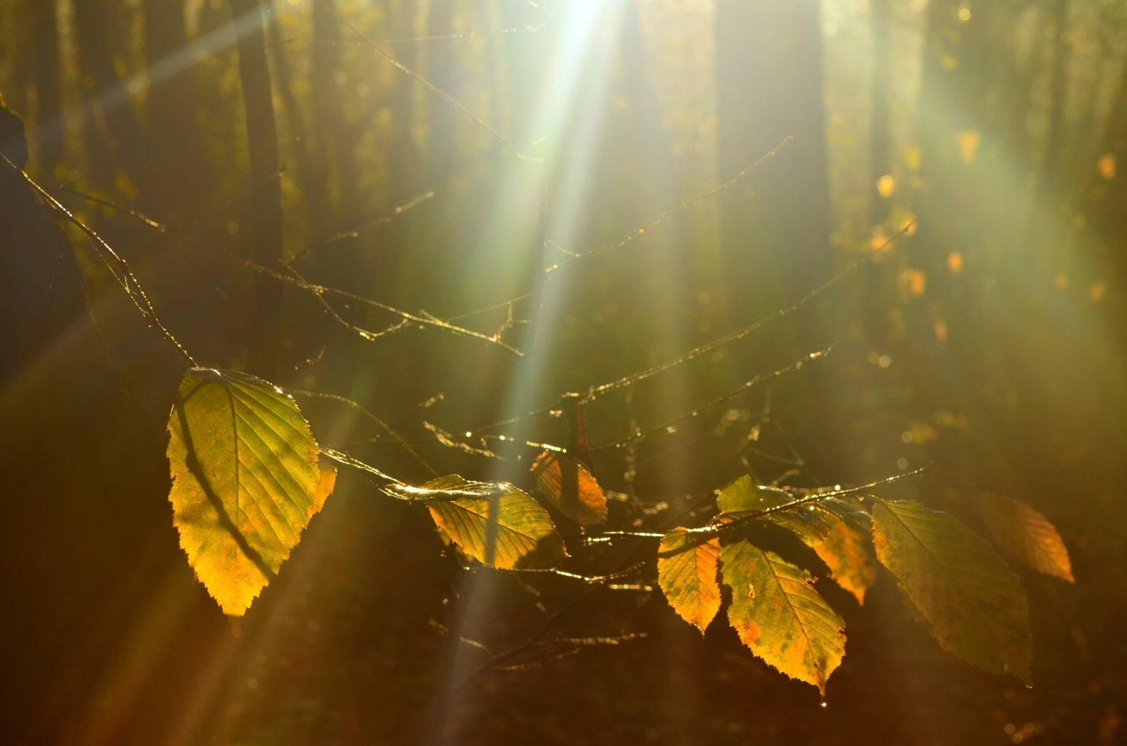осень рассвет лес листва, Александр Жарников