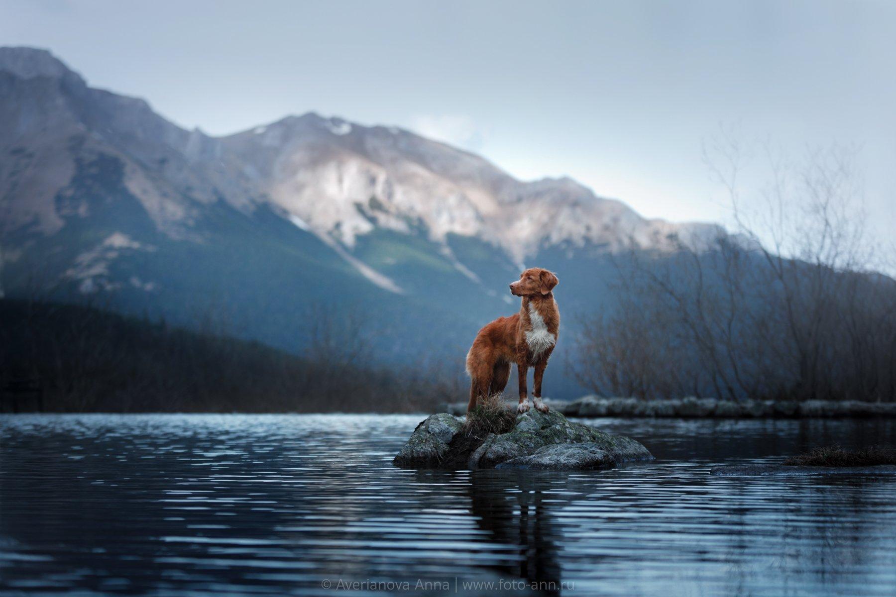 собака, природа, горы, Анна Аверьянова