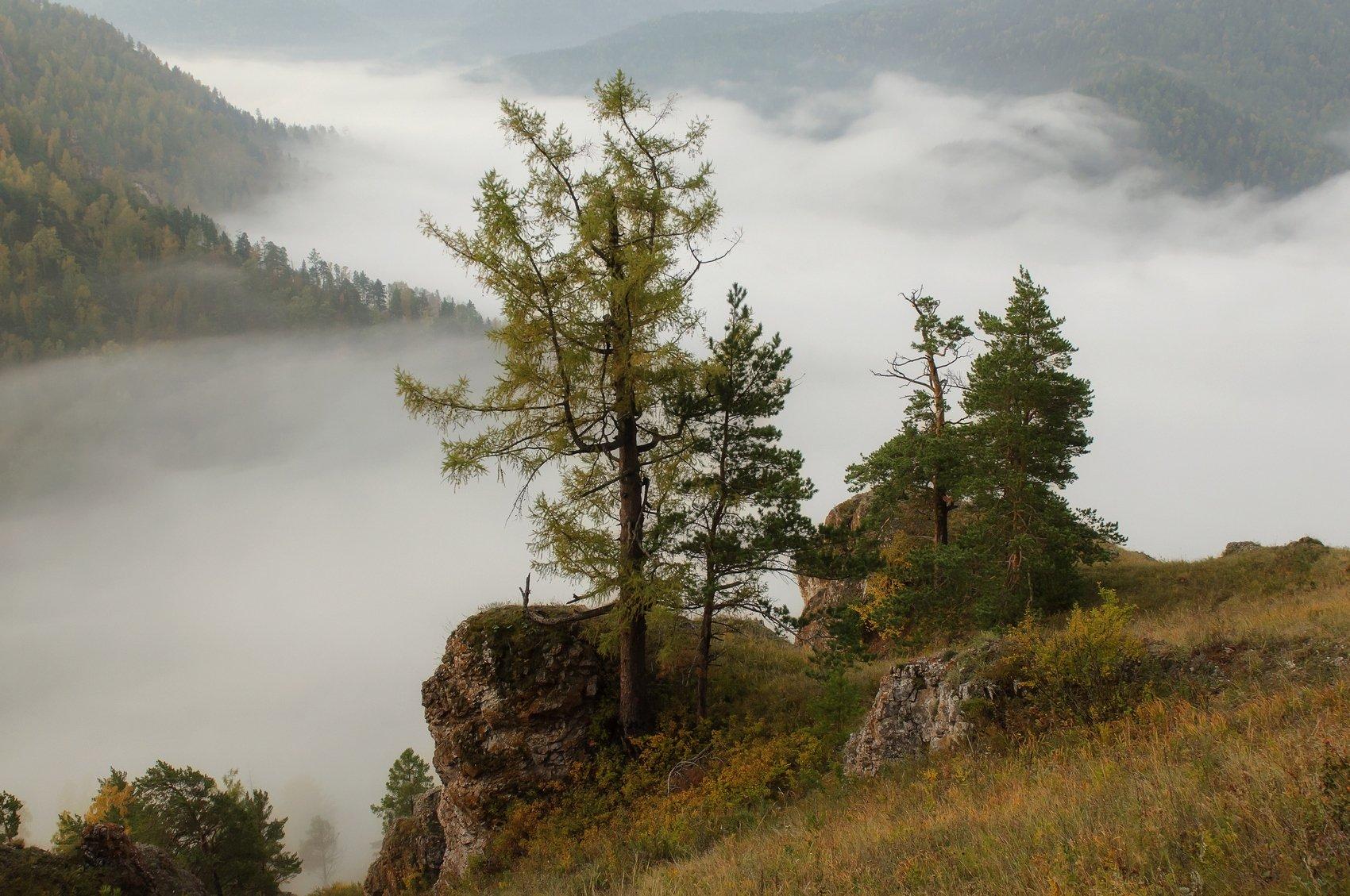 торгашинский хребет. склон. туман., Марина Фомина.