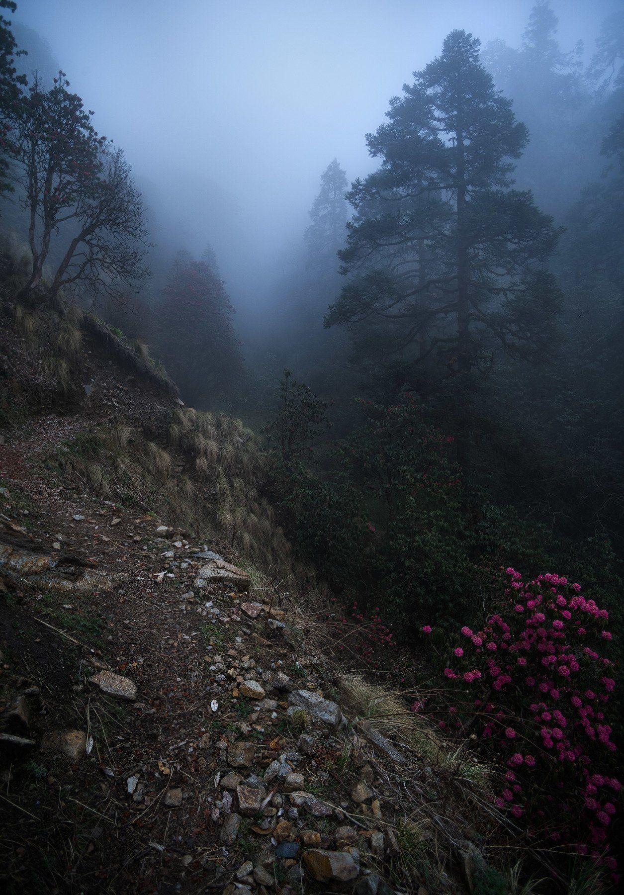 Непал, Гималаи, туман, лес, Александр  Равин