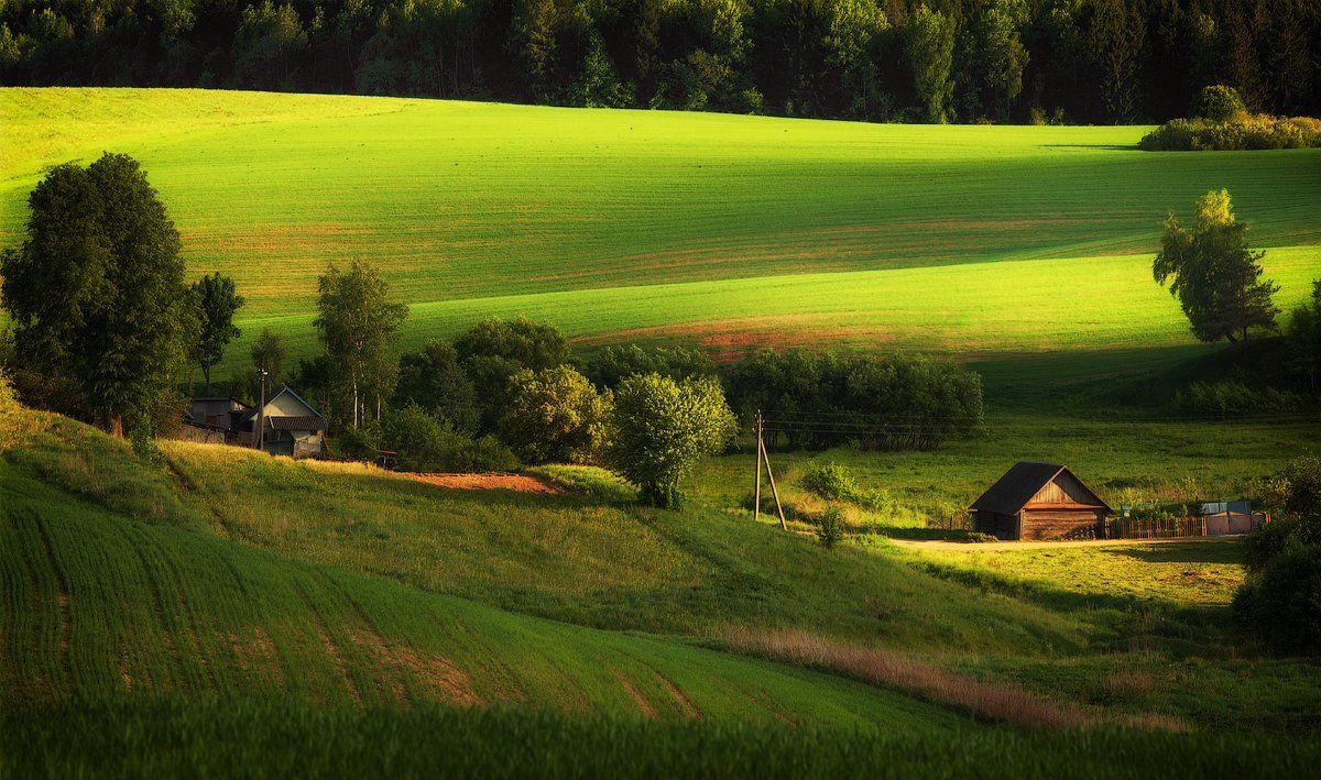 вечер, деревня, село, свет, весна, зелёный, поле, Алексей Черепанов