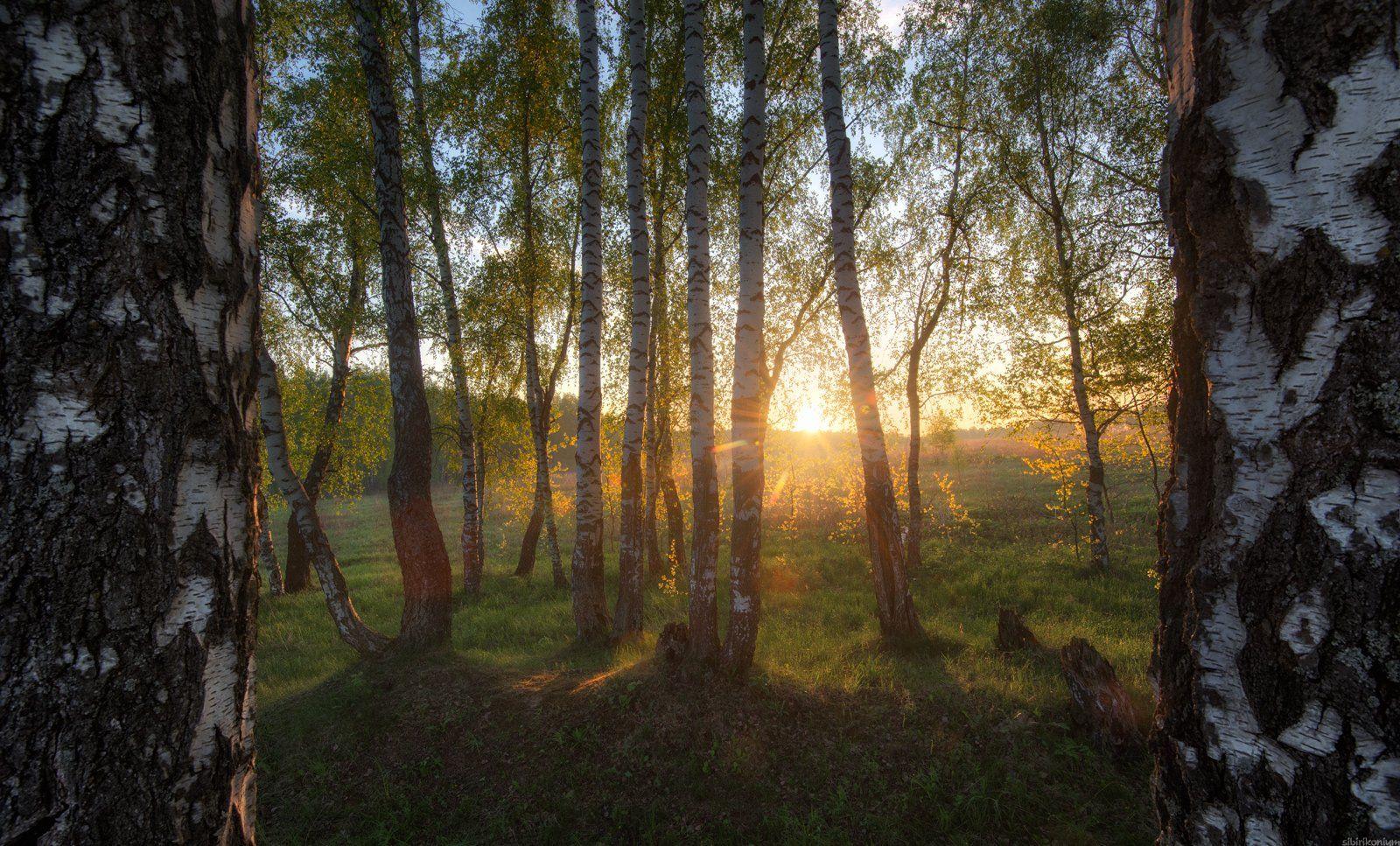 #пейзаж #весна #подмосковье #чехов #красиво #природа #восход #утро , Морозов Юрий