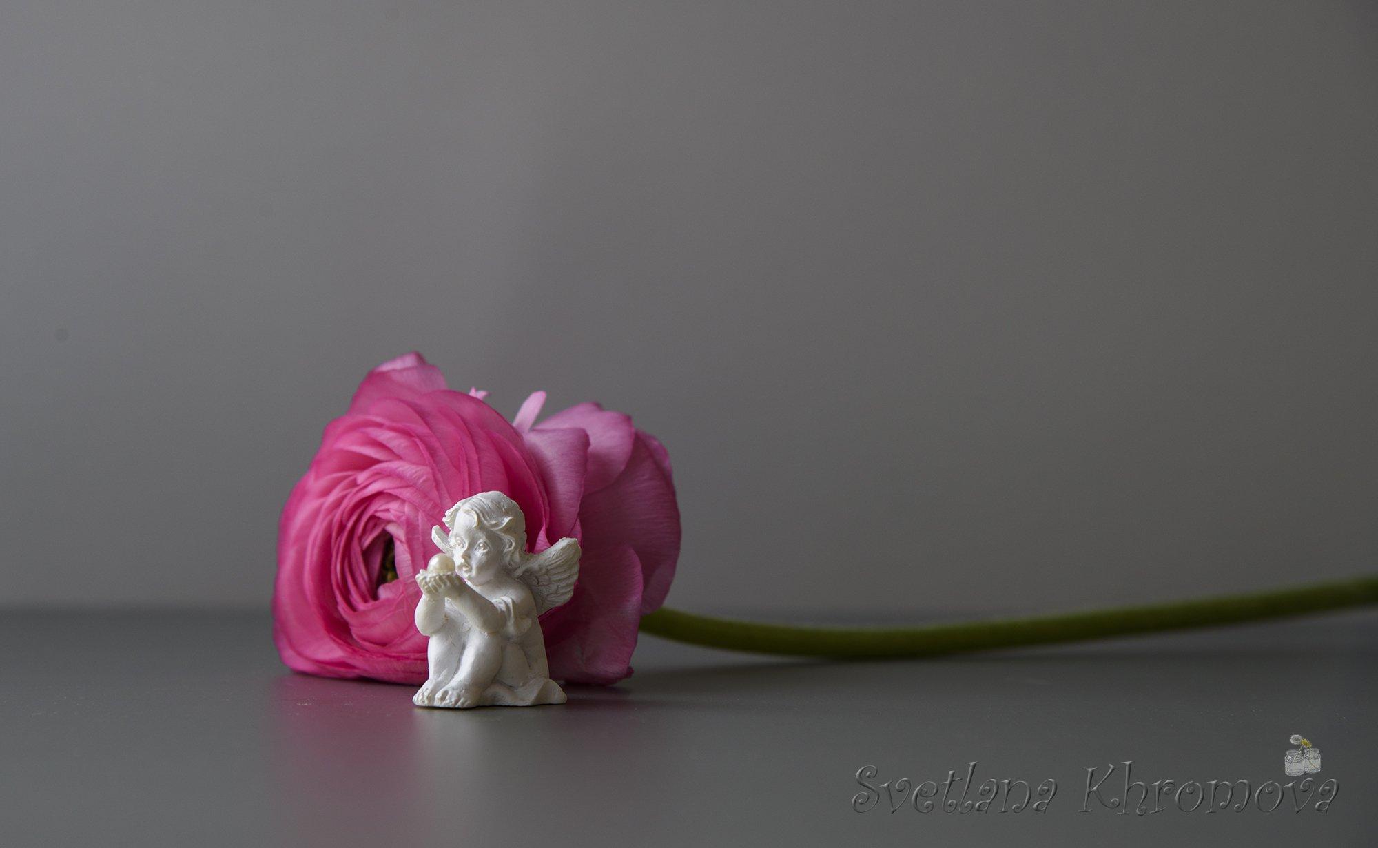 лютик, ангел, Светлана Хромова
