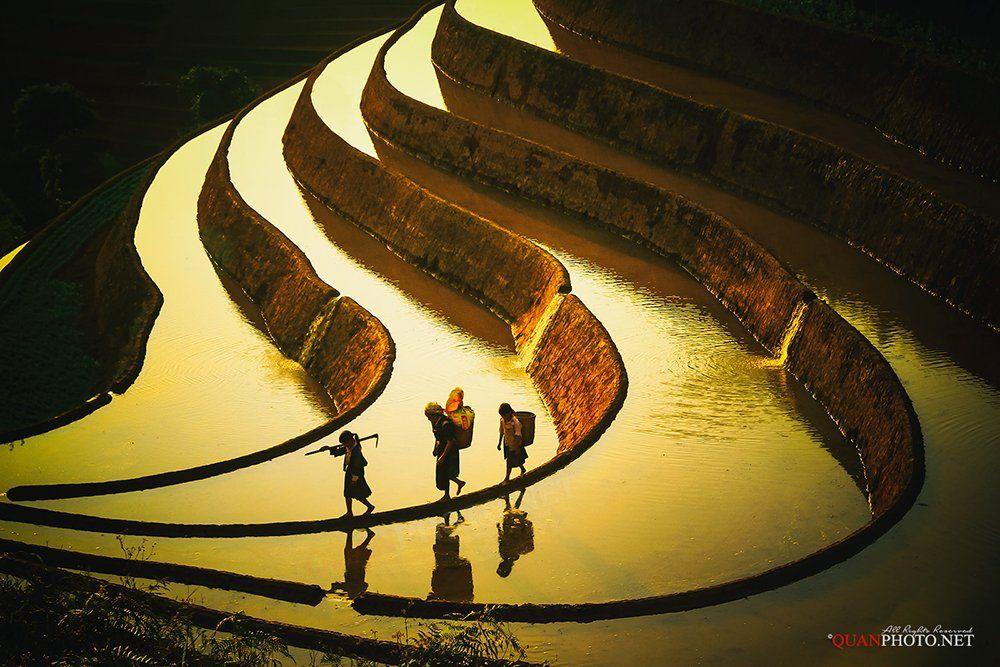 quanphoto, landscape, sunlight, water, people, ethnic, reflections, farming, farmland, agriculture, farmers, terraces, shadow, mucangchai, yenbai, vietnam, quanphoto