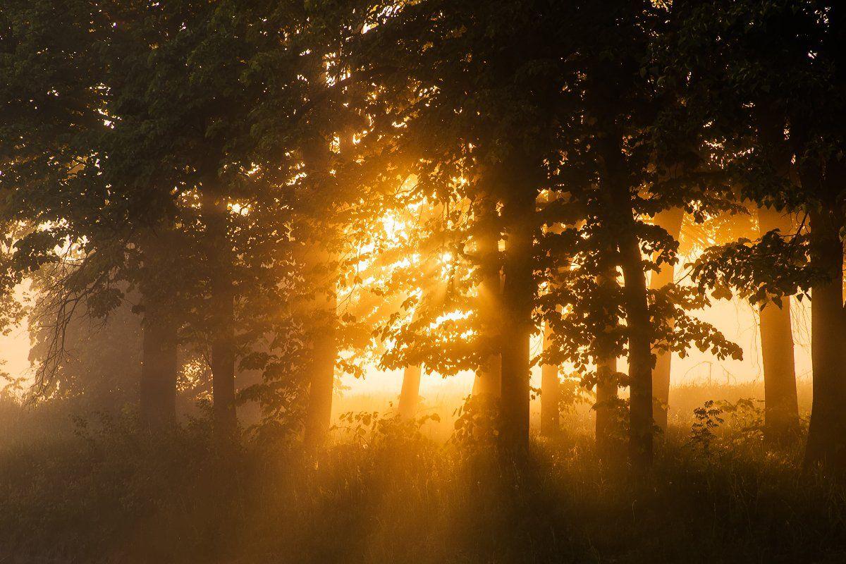 туман, рассвет, лес, река, Антон Петрусь