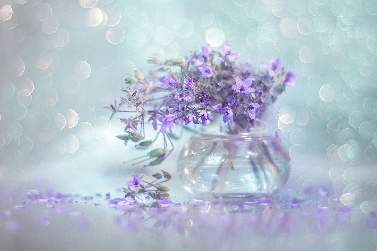 iglica,pospolita,kwiaty,bokeh,natura,martwa,przyroda, Grażyna Nowotna