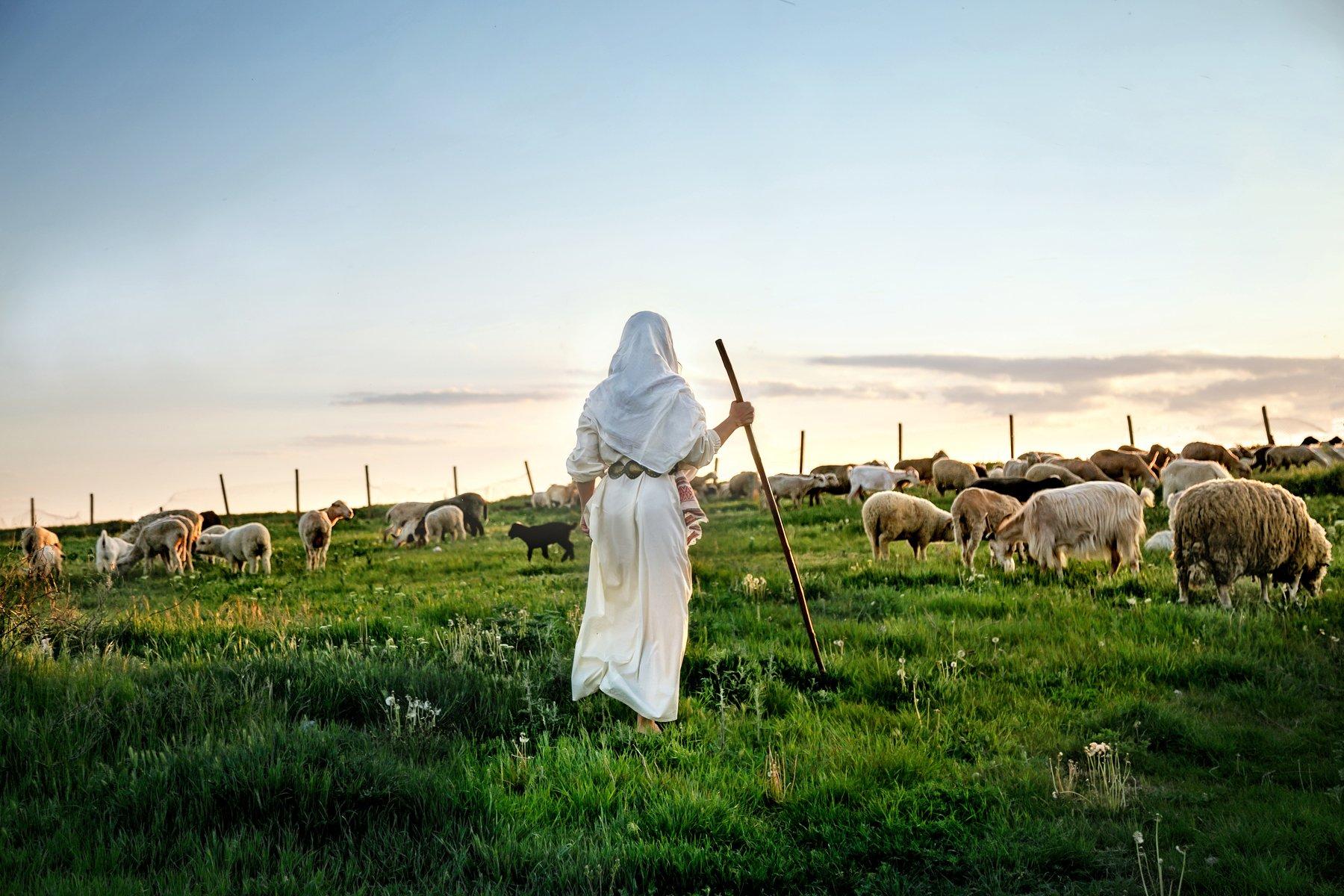 пастушка, овцы, весна , Мария Братан