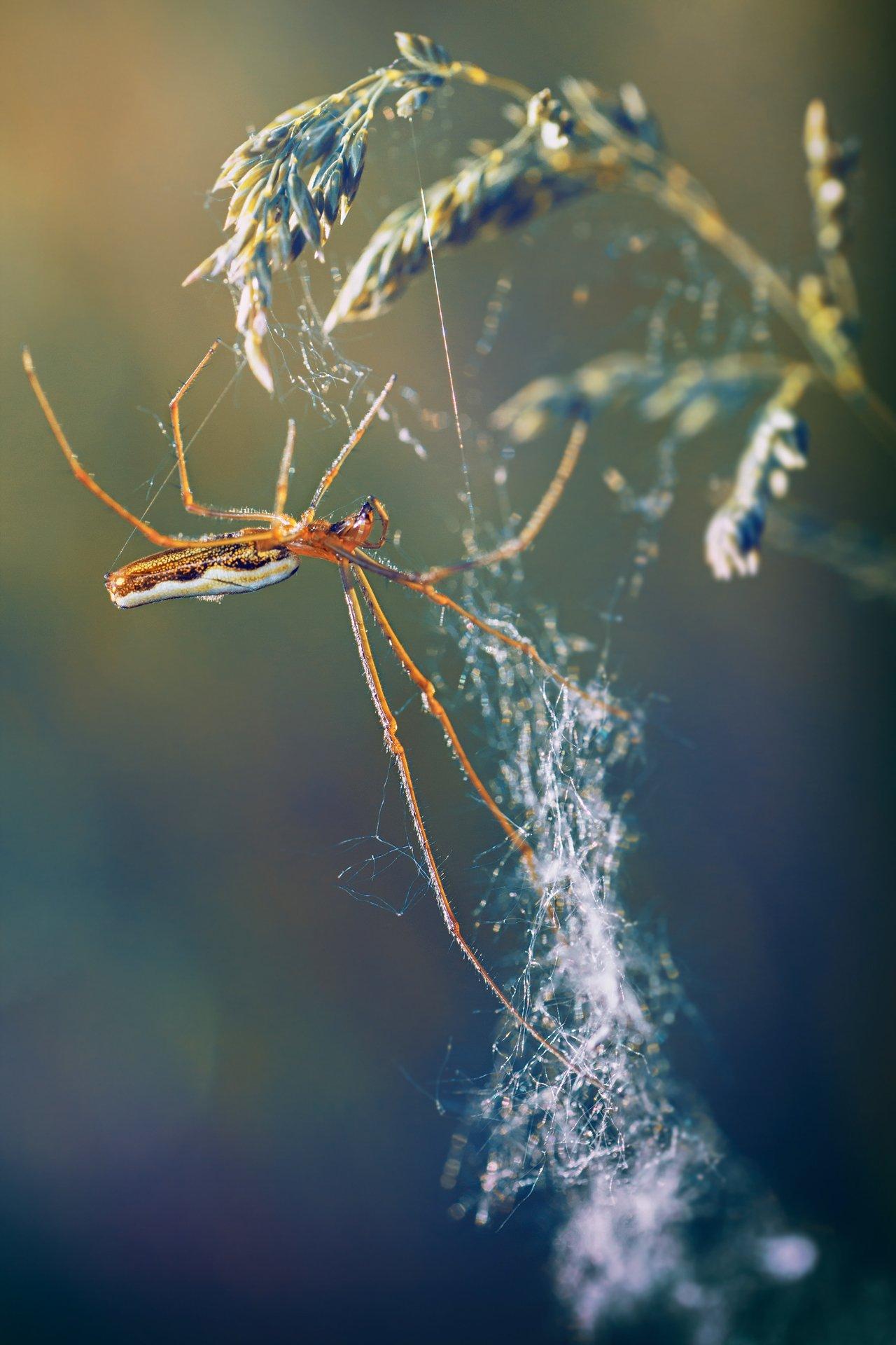паук,лапы,дерево,цвет,осень,зелень,листва,трава, Котов Юрий