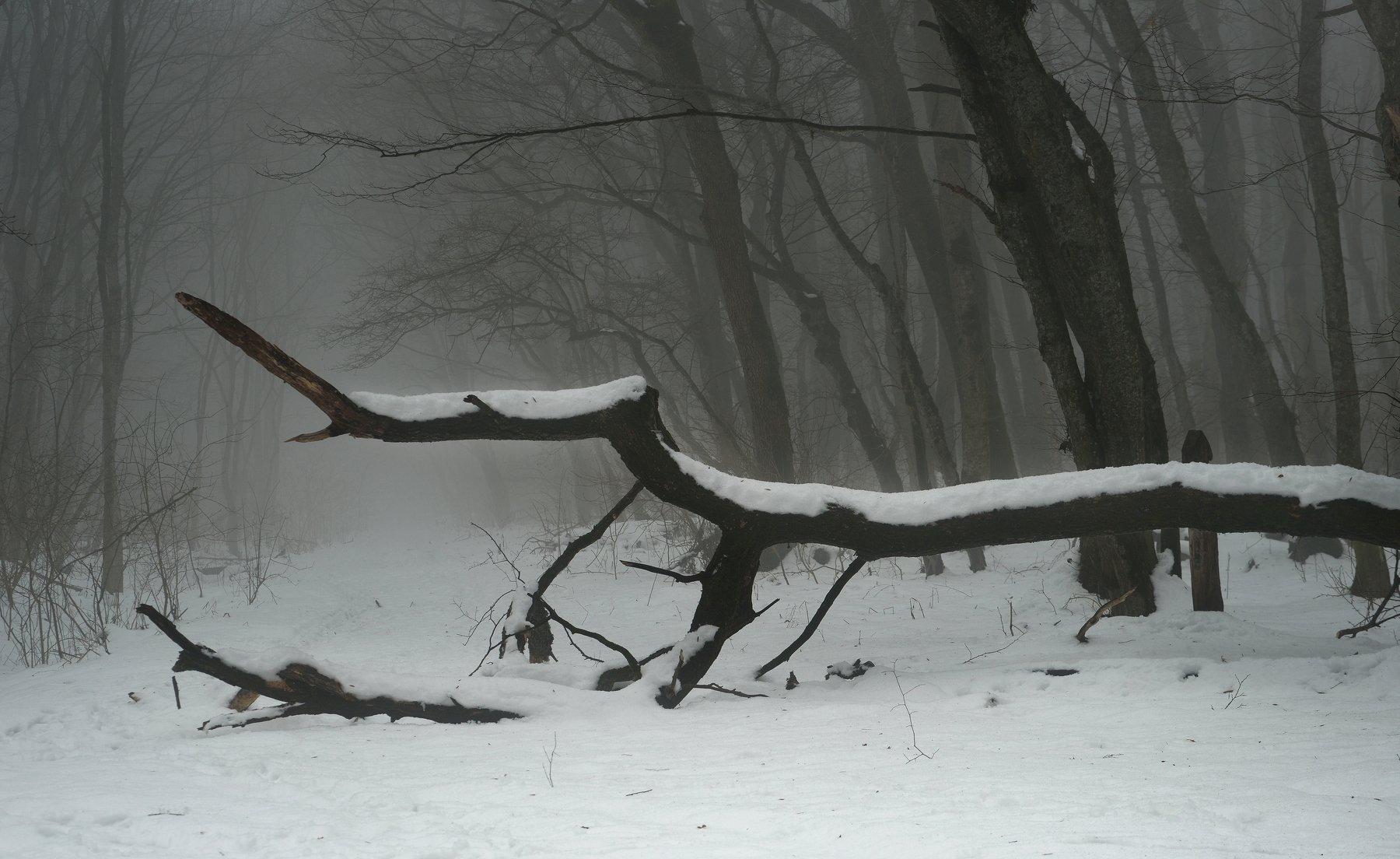 зима лес туман, Александр Жарников