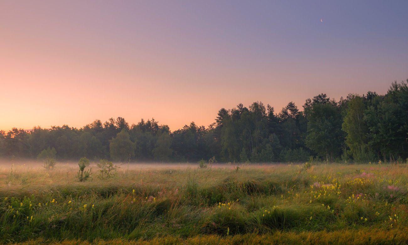 луг, лето, рассвет, месяц, Галанзовская Оксана