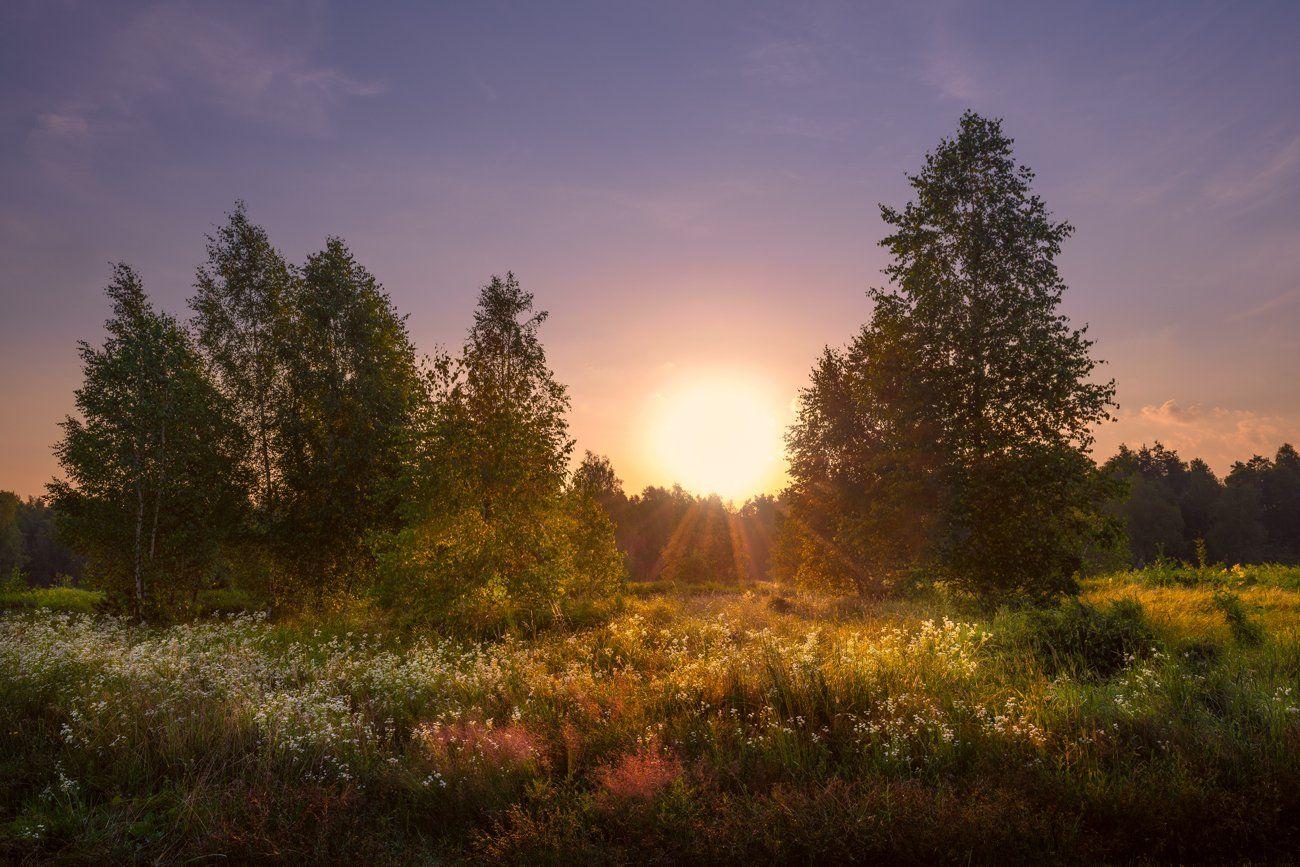 лето, луг, июль, рассвет, Галанзовская Оксана