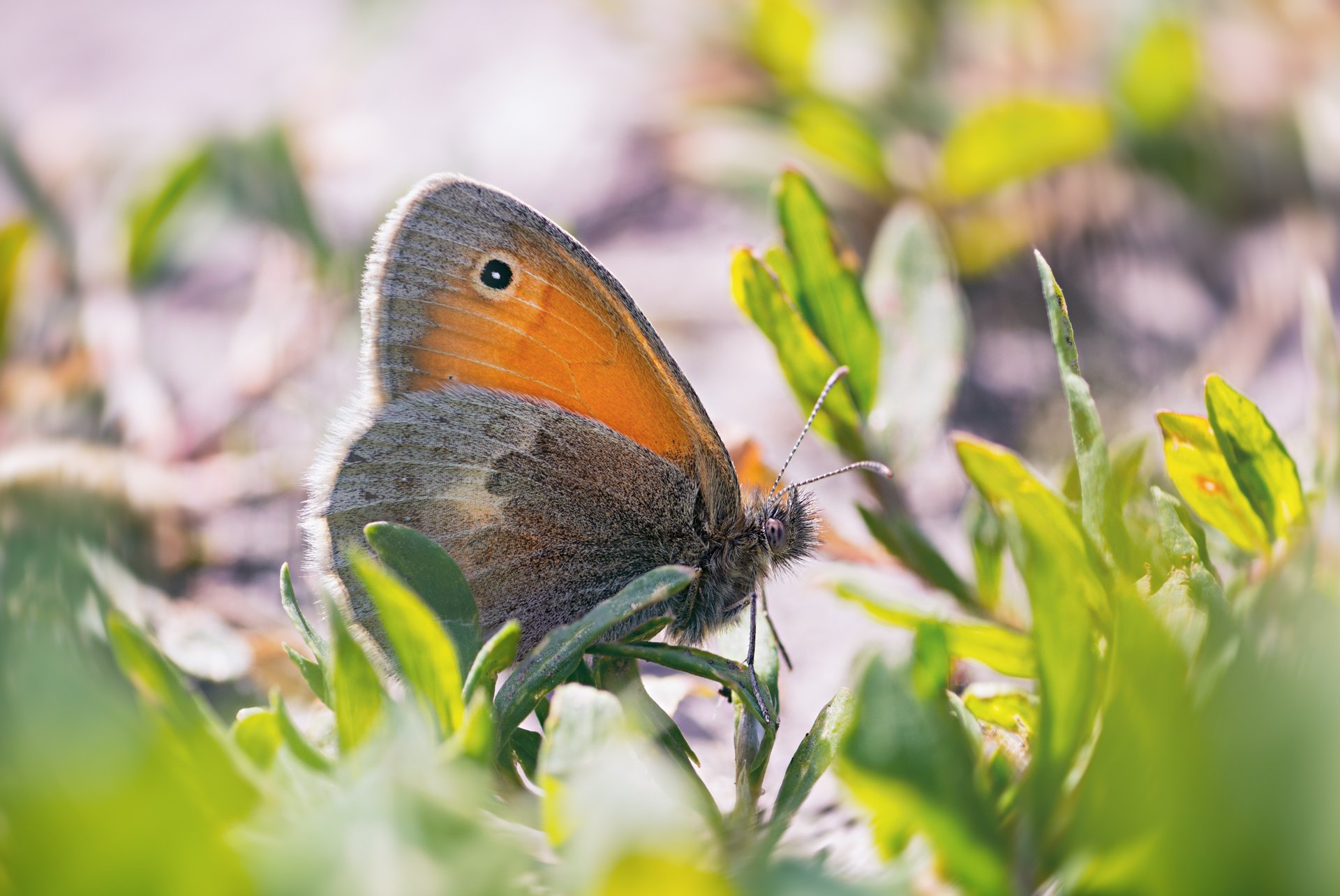 бабочка,ветка,цвет,красный,желтый,крылья, Котов Юрий