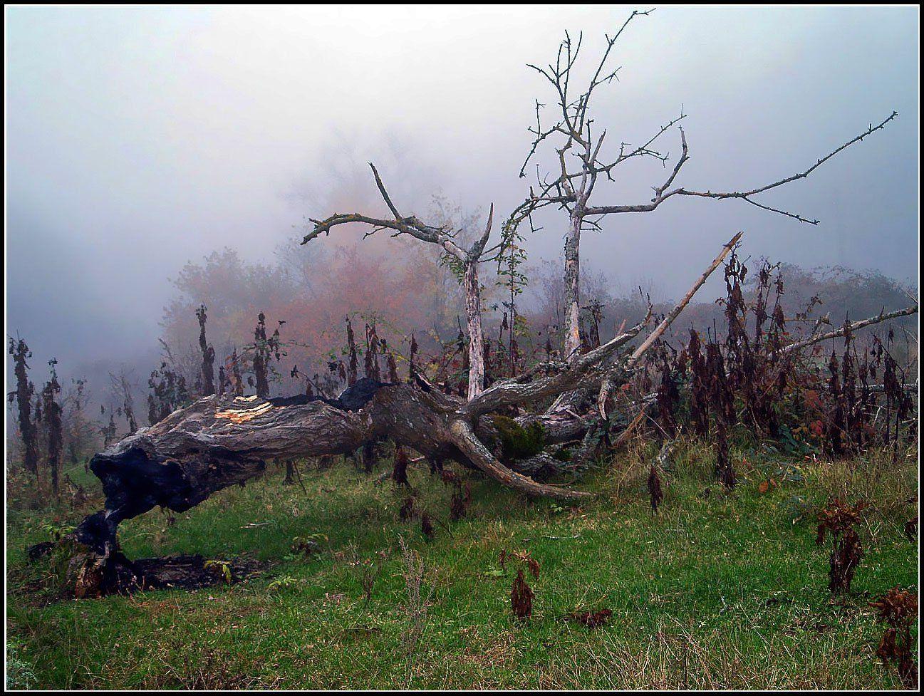 дерево,коряга.туман, Марат Магов