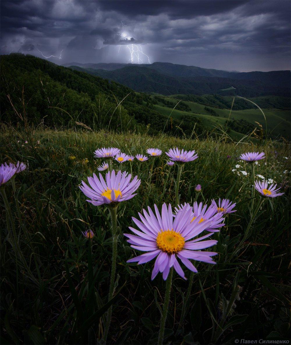 алтай, белокуриха, пейзаж, закат, вечер, лето, горы, , небо, облака, цветы, гроза, Павел Силиненко
