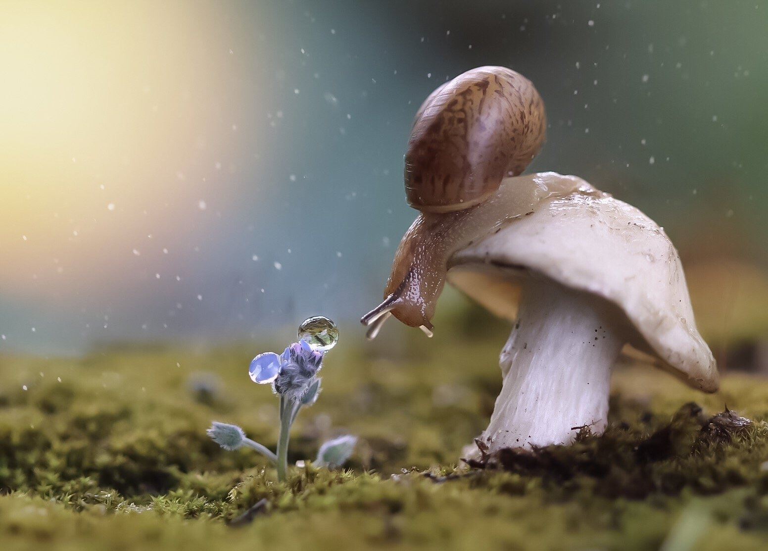 макро, macro, snail, mushroom, гриб, nature, wildlife, evening, Людмила Гудина