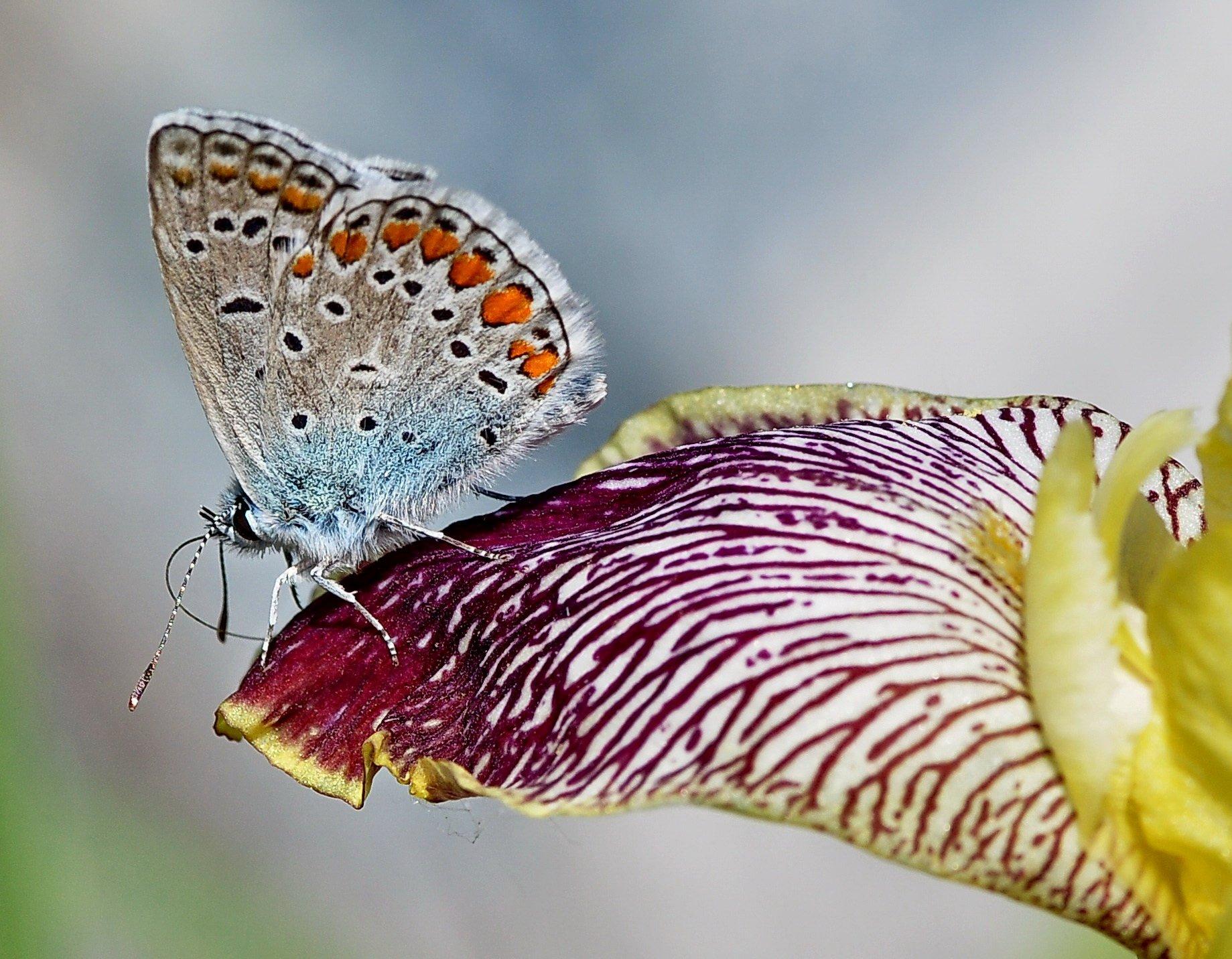 бабочка, Евгений
