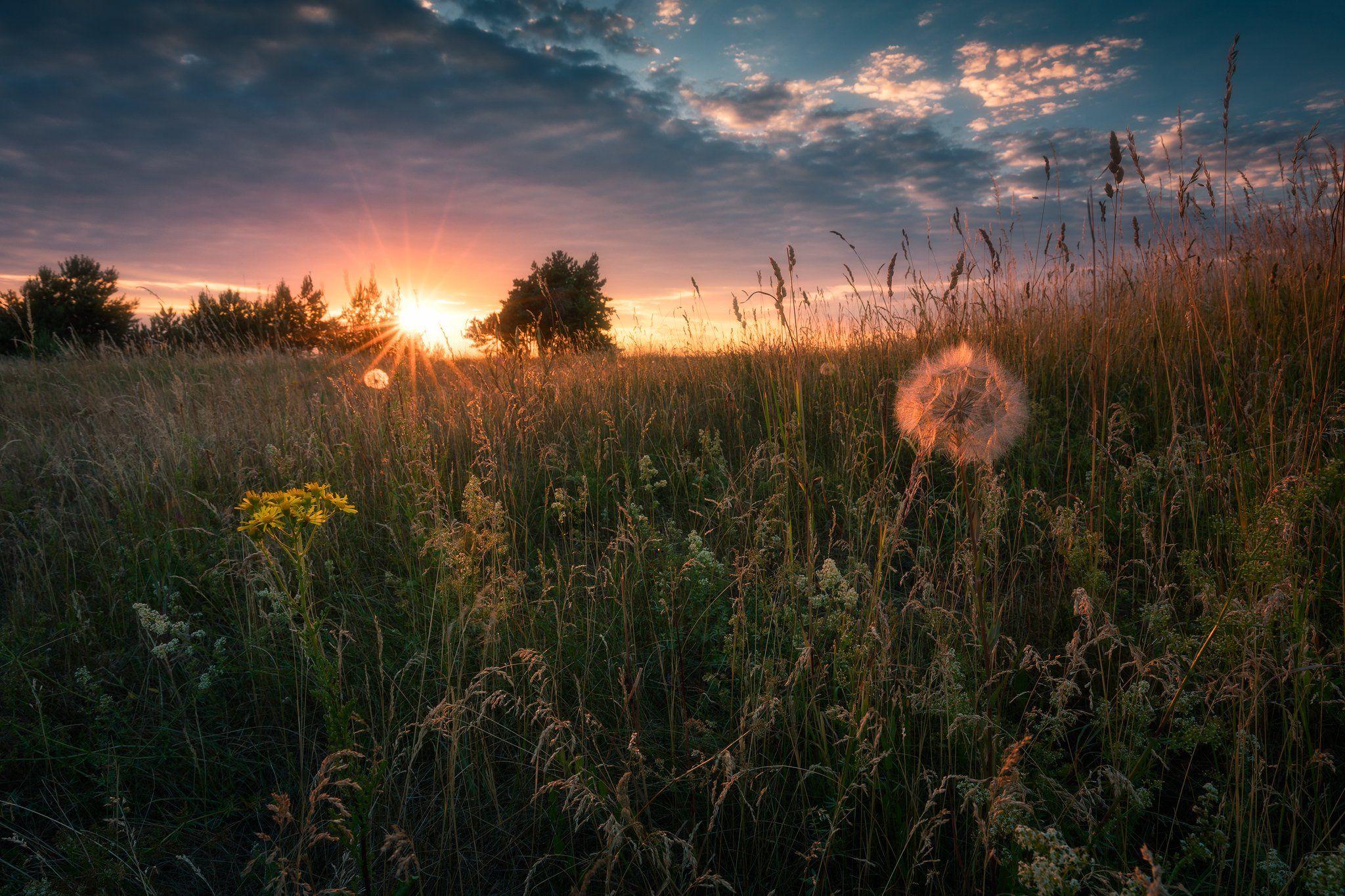 meadow spring wildflowers flowers sunset sky clouds colors mood poland podlasie, Maciej Warchoł