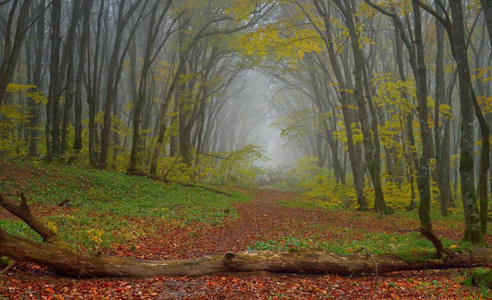 осень лес тропа, Александр Жарников